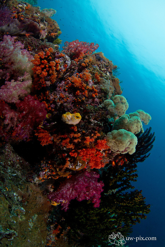 colors at eagles nest raja ampat, Indonesia, south Misool april 2011