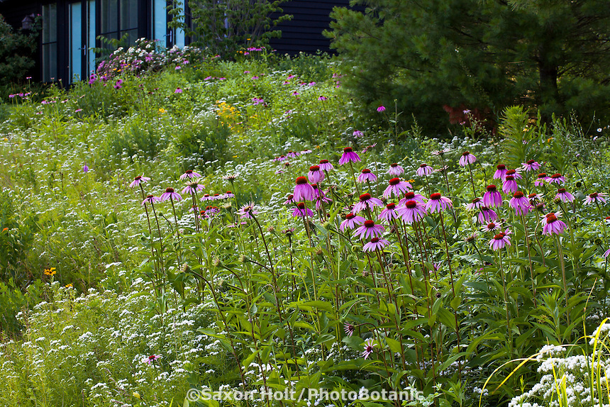 Connecticut meadow garden <br />