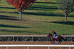 November 3, 2020: Invincible Gal, trained by trainer H. Graham Motion, exercises in preparation for the Breeders' Cup Juvenile Fillies Turf at Keeneland Racetrack in Lexington, Kentucky on November 3, 2020. John Voorhees/Eclipse Sportswire/Breeders Cup/CSM