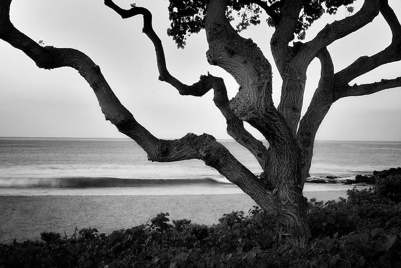Tree and wave. Near Hapuna Beach. Hawaii, Island
