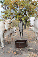 "Afrika Suedsudan Rumbek , Dinka Dorf Colocok , Maedchen fuettert und traenkt Ceburinder - Landwirtschaft | .Africa South Sudan Rumbek , Dinka village Colocok, Cebu cattle - agriculture  | [ copyright (c) Joerg Boethling / agenda , Veroeffentlichung nur gegen Honorar und Belegexemplar an / publication only with royalties and copy to:  agenda PG   Rothestr. 66   Germany D-22765 Hamburg   ph. ++49 40 391 907 14   e-mail: boethling@agenda-fototext.de   www.agenda-fototext.de   Bank: Hamburger Sparkasse  BLZ 200 505 50  Kto. 1281 120 178   IBAN: DE96 2005 0550 1281 1201 78   BIC: ""HASPDEHH"" ,  WEITERE MOTIVE ZU DIESEM THEMA SIND VORHANDEN!! MORE PICTURES ON THIS SUBJECT AVAILABLE!! ] [#0,26,121#]"