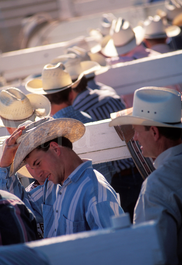 Cowboys in chute with hats