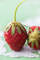 Gastronomie générale / Diététique / Fraise Garrigette bio  // General gastronomy / Diet / Organic Garrigette strawberry