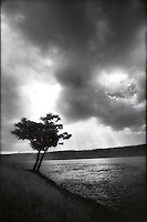 Solitary Tree at the End of Manhattan<br />