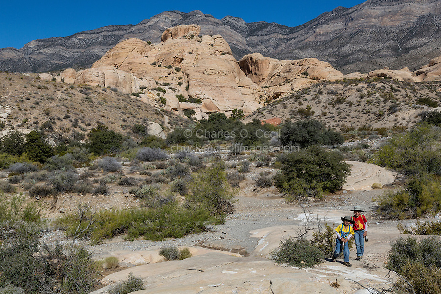 Red Rock Canyon, Nevada.  Two Young Boys Hiking near Sandstone Quarry.  Gray Limestone Keystone Thrust in upper background.