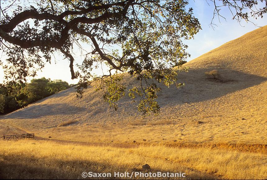 Mount Burdell California summer hills (brown)