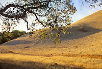 Mount Burdell California summer hills (brown)