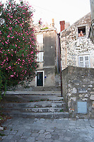 A back street with a big tree in bloom with pink flowers, an man leaning out a roof top window with a naked torso. Dubrovnik, old city. Dalmatian Coast, Croatia, Europe.