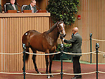 September 09, 2014: Hip #268 Fastnet Rock (AUS) - So Stylish filly consigned by Lane's End sold for $600,000 to Al Shahaniaa Stud at the Keeneland September Yearling Sale.   Candice Chavez/ESW/CSM