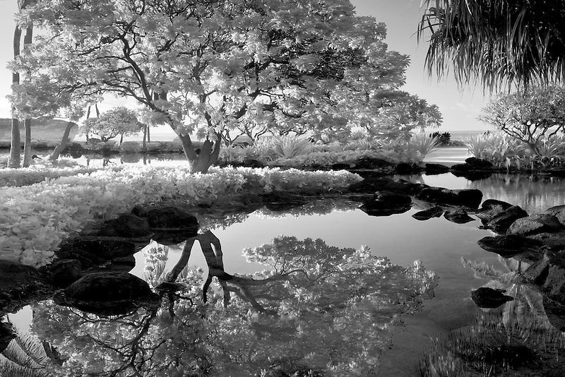 Pond reflecting trees. Grand Hyatt, Kauai, Hawaii