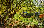 Hidden garden, house in Mt Wilson, NSW, Australia