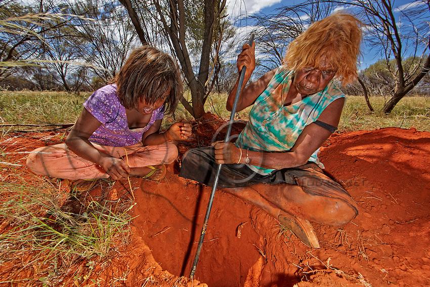 / Aborigine women still sometimes practice this harvest on the plains where the mulga tree grows. The Melophorus bagoti ants live in symbiosis with this tree.///Les femmes aborigènes pratiquent encore cette récolte à l'occasion dans les plaines ou pousse l'arbre mulga. Les fourmis Melophorus bagoti vivent en symbiose avec cet arbre.