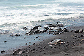 Sea Turtle basks in sun