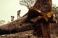 Amazon rainforest pictures