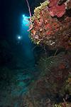 Reef scene, CoCoView Wall, Roatan