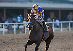 July 5th, 2012. Switch and Garrett Gomez win the A Gleam Handicap(GII) at Betfair Hollywood Park, Inglewood, CA.