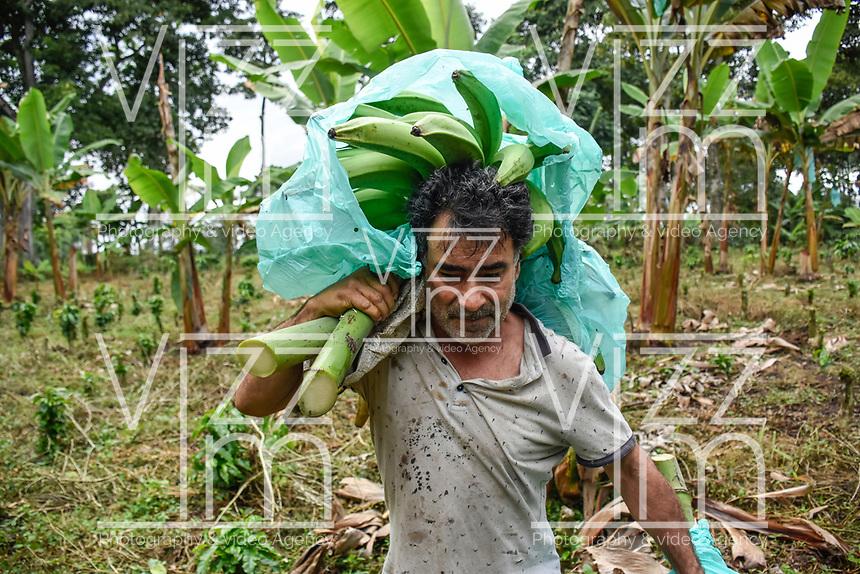 ARMENIA - COLOMBIA, 26-05-2021: El intermediario asume el pago y la presencia de los cortadores de plátano, el pago está entre los COP 50.000 y los 70.000. A más de un mes del inicio del Paro Nacional, los campesinos han tenido que reinventar la forma para mantener sus cultivos y criaderos activos para minimizar las pérdidas por los bloqueos que aún se mantienen en las vías. Según cifras del Ministerio de Hacienda, las pérdidas diarias están en un monto de $480.000 millones de pesos colombianos, lo cual sumando la totalidad de los días del Paro Nacional, suman un total de $10,8 billones de pesos colombianos. / The middleman assumes the payment and the presence of the plantain cutters, the payment is between COP 50,000 and 70,000. More than a month after the beginning of the National Strike, farmers have had to reinvent the way to keep their crops and farms active in order to minimize losses due to the blockades that still remain on the roads. According to figures from the Ministry of Finance, daily losses are in the amount of $480,000 million Colombian pesos, which adding the total number of days of the National Strike, add up to a total of $10.8 billion Colombian pesos. Photo: VizzorImage / Santiago Castro / Cont