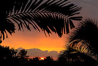 Palm frond silhouetted at sunset in Keauhou, near Kona on the Big Island