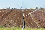 Reciprocating sprinkler irrigates vegetable field in western Oregon.