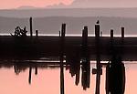 Skagit River Estuary, Puget Sound, Olympic Mountains, Washington State, Skagit County, Washington State Fish Wildlife, Washington Wildlife and Recreation Program, South Fork slough, old log raft pilings,.