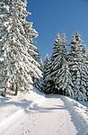 Oesterreich, Salzburger Land, Winterwanderweg bei Dienten am Hochkoenig   Austria, Salzburger Land, Winter Hiking Trail near Dienten at Hochkoenig mountain