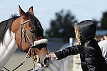 18 October 2009: A young race fan greets one of the track ponies with some tender loving care between races at Keeneland.
