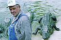 Alligator farmer Harvey Kleibert, 2001