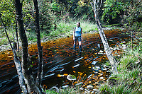Female tramper crossing a bush creek on Saltwater Lagoon track - Westland National Park, West Coast, New Zealand