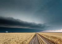 Thunderstorm Shelf Cloud Above Yellow Wheat Field near Goodland, KS, June 15, 2012
