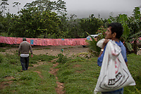 """Supporters of former Bolivian President Evo Morales, known as coca growers """"cocaleros"""", work in a farmer's plot, in Entre Rios, Chapare province, Bolivia. November 27, 2019.<br /> Les partisans de l'ancien président bolivien Evo Morales, connus sous le nom de cultivateurs de coca """"cocaleros"""", travaillent dans une parcelle agricole, à Entre Rios, province du Chapare, Bolivie. 27 novembre 2019."""