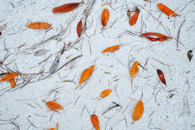 Mangrove leaves and pine needles in water on shore. Turks and Caicos.