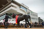 FUNABASHI,JAPAN-FEBRUARY 25: Win Bright,ridden by Masami Matsuoka, after winning the Nakayama Kinen at Nakayama Racecourse on February 25,2018 in Funabashi,Chiba,Japan (Photo by Kaz Ishida/Eclipse Sportswire/Getty Images)