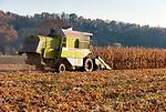 Deutschland, Bayern, Oberbayern, Rosenheimer Land, bei Neubeuern: Maisernte | Germany, Upper Bavaria, Rosenheimer Land, Neubeuern: harvesting corn