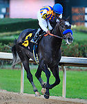 19 March 2011: Martin Garcia rode Bob Baffert trained The Factor (6) to win in the51st Rebel Stakes at Oaklawn Park in Hot Springs, Arkansas (Jimmy Jones/Eclipse Sportswire)