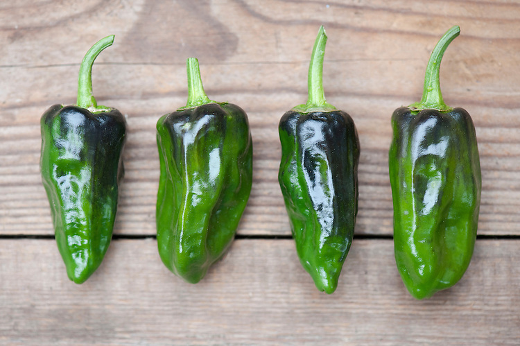 Padron peppers (Pimientos de Padron), mid October. These peppers are notoriously unpredicatable: most are sweet and mild but just a few are unexpectedly hot.