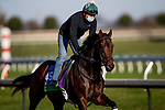 November 2, 2020: Casa Creed, trained by trainer William I. Mott, exercises in preparation for the Breeders' Cup Mile at Keeneland Racetrack in Lexington, Kentucky on November 2, 2020. Alex Evers/Eclipse Sportswire/Breeders Cup