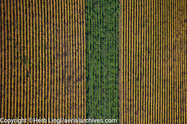 aerial photograph vineyards differing grape varieties Sonoma County, California