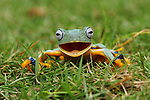 Escaped pet frog smiles at owner after it is found by Agus Fitriyanto