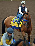 ARCADIA, CA - NOV 01: Hoppertunity, owned by Michael E. Pegram, Karl Watson & Paul Weitman and trained by Bob Baffert, exercises in preparation for the Breeders' Cup Classic at Santa Anita Park on November 1, 2016 in Arcadia, California. (Photo by Scott Serio/Eclipse Sportswire/Breeders Cup)