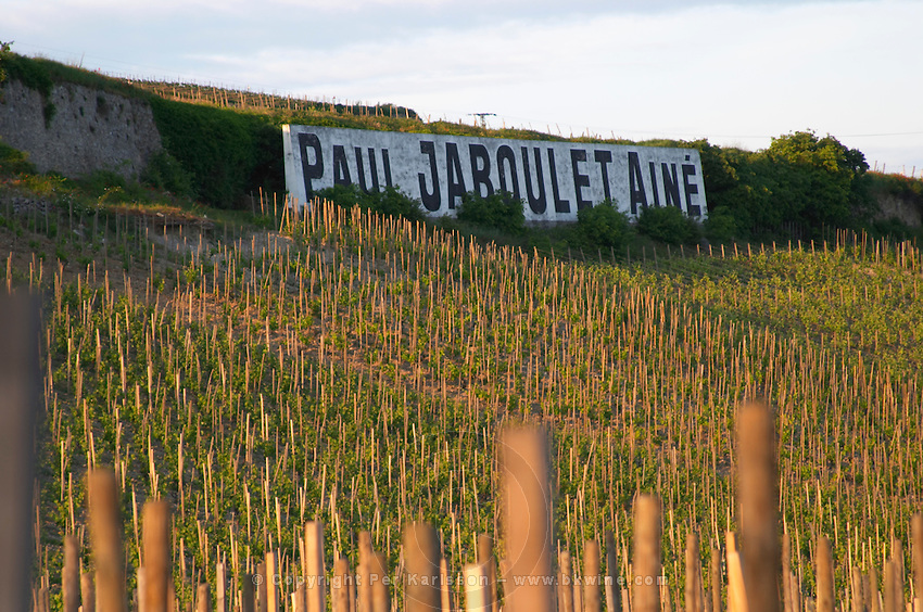 vineyard domaine paul jaboulet hermitage rhone france