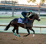 October 31, 2020: Bodenheimer, trained by trainer Valorie L. Lund, exercises in preparation for the Breeders' Cup Juvenile Turf Sprint at Keeneland Racetrack in Lexington, Kentucky on October 31, 2020. Scott Serio/Eclipse Sportswire/Breeders Cup/CSM