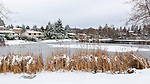 Rare snow and ice coats Lake Lorene in Federal Way, Washington, USA.  Wildlife gathers at open water, and swimmers stay away.
