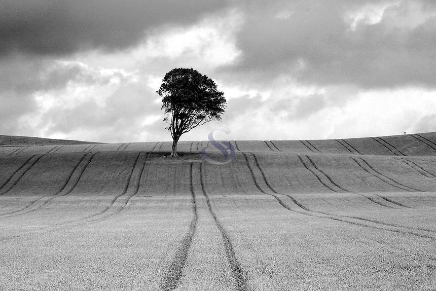 Lone Tree near West Kilbride, Ayrshire