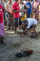 Bali, Indonesia.  Cock Fighting in an Indonesian Village.  Most matches end in the death of one of the birds.  This one is badly injured.