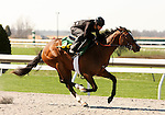 01 April 2010.  Hip #84 Forest Wildcat - Orate filly.