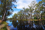River Redgums, Red Gum Forrest, Mathoura NSW