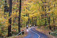 Motorcyclists on rural autumn road, Mt. Greylock State Reservation, Massachusetts, USA