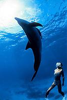 Indo-Pacific bottlenose dolphin, Tursiops aduncus, (mr) Bonin Islands, Ogasawara, Tokyo, Japan, Pacific Ocean