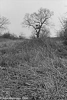 Tree house in the grounds, Summerhill school, Leiston, Suffolk, UK. 1968.