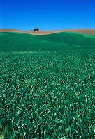 Wheat field and tractor. Palouse region, Whitman County, WA